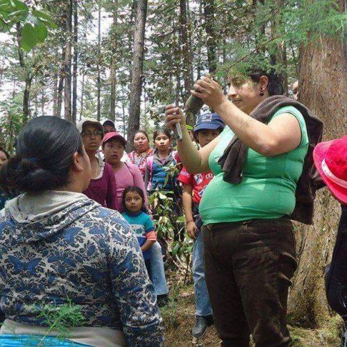 English Without Borders Quetzaltenango